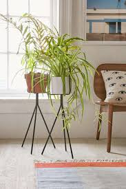 plant stand 37 unforgettable ornamental plant stands images