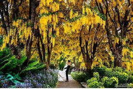 Vandusen Botanical Garden Wedding Vandusen Gardens Wedding Will Pursell Photo