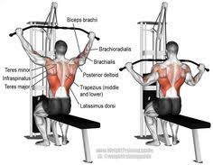 What Muscle Do Bench Press Work Lower Back Exercises To Target Different Back Muscles 2