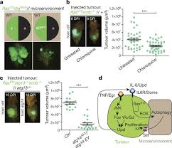 microenvironmental autophagy promotes tumour growth nature