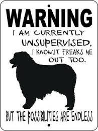 australian shepherd outline australian shepherd u2013 etsy everything dog pinterest bags