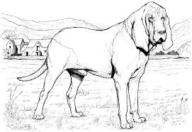 printable 30 realistic dog coloring pages 4627 realistic dog