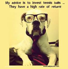 boxer dog sayings 104 best cool beans and boxer info images on pinterest boxers