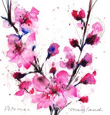 cherry blossom flower drawings google search tattoos
