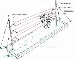 Tomatoes Trellis Best 25 Tomato Trellis Ideas On Pinterest Tomato Support