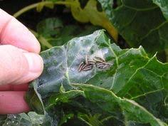 plant pest identification aid includes pests and beneficials