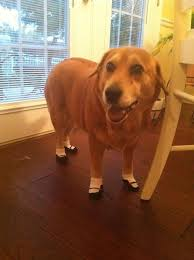 my blind three legged had been slipping on floors a lot so