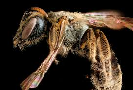 bee learning and communication wikipedia