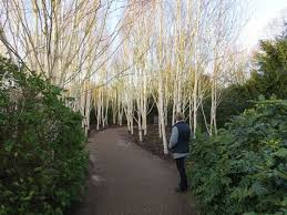 Anglesey Abbey Winter Garden - pushing the borders u2022 view topic autumn winter garden project