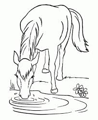 horse drinking water from the river coloring pages animal