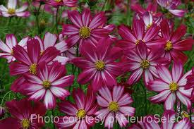 easy flowers to grow indoors instructive easy flowers to grow download solidaria garden