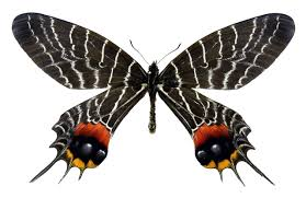get to the symbolism and meaning of a black butterfly