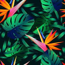 tropical flowers jungle leaves bird of paradise flower stock