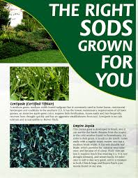 pros and cons of different sod varieties superior sod mulch