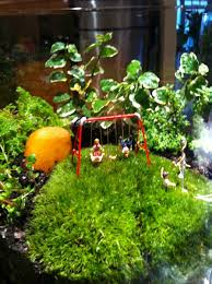 moss terrarium care interiorscapes by steve