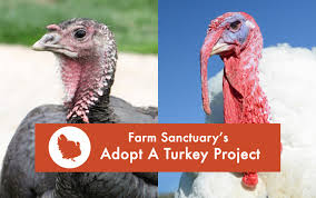 Farm Story Thanksgiving Adopt A Turkey For Thanksgiving The Kind Life