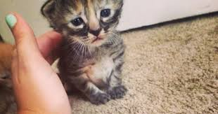 Sad Kitty Meme - is this the saddest cat you have ever seen mirror online