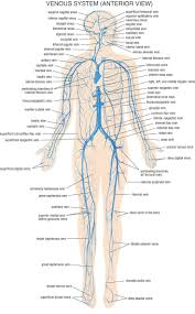 Human Anatomy And Physiology Review 134 Best Anatomy And Physiology Images On Pinterest Medicine