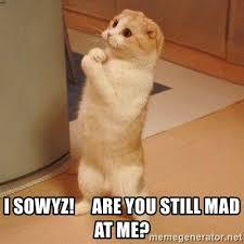 U Still Mad Meme - i sowyz are you still mad at me sorry cat meme generator