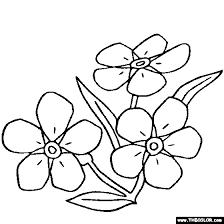 forget flower myosotis coloring