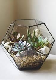 resume modernos terrarios suculentas modernos terrarios de cactus 28 images jard 237 n de cactus y