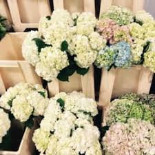 wholesale flowers miami mayesh wholesale florist 24 photos florists 3950 w diablo dr