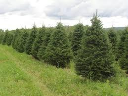 christmas tree on sale the hamilton wenham edfund kicks its most spirited tradition