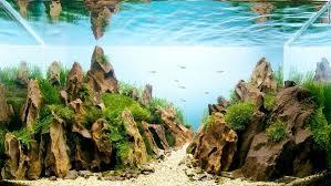 Nature Aquascape Aquascape U2013 Basic Principles And Elements Of Landscaping Under Water
