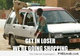 Camel Meme - 16 funny camel meme pmslweb