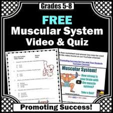 endocrine system here is a free endocrine system and hormones