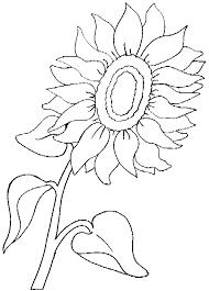 coloriage fleurs et plantes tournesols à colorier allofamille