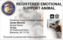 Comfort Dog Certificate Emotional Support Dog Gear Equipment Vests And More