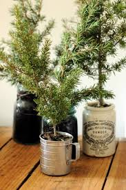mini potted trees place them in pots covered with blackboard