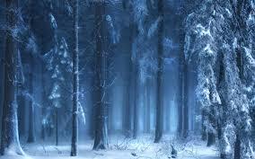 frozen forest wallpaper hd hd desktop images colourful 4k