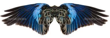 Bird Wing - blue bird wings isolated stock photo hddigital painting