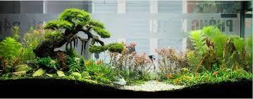 Aquascape Inspiration Aquascaping Inspiration Part 1 Bonsai Styles