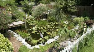 diy a backyard pond where fish can spread their fins news