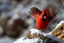 the great outdoors bird feeding fun for everyone