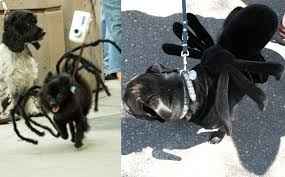 pet costumes 6 dog costumes you can make with or no