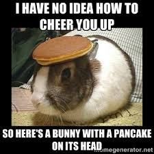Funny Cheer Up Meme - bunny with pancake on head i have no idea how to cheer you up so