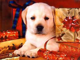christmas dog wallpapers wallpaper cave