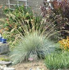 92 best gorgeous grasses images on plants garden