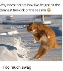 Too Much Swag Meme - why does this cat look like he just hit the cleanest freekick of the