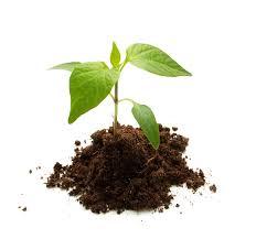 how to start seeds indoors old farmer u0027s almanac