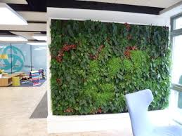 amazing green wall in fornt of the stores with various plants for