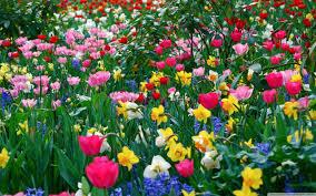 free desktop backgrounds spring flowers hd nature wallpaper