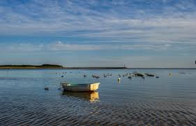 researchers to discuss state of wellfleet harbor today at annual