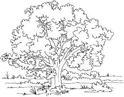 Coloriage arbre 5  Coloriage dArbres  Coloriages pour enfants