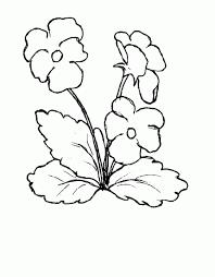 colorear flores 19 dibujo colorear