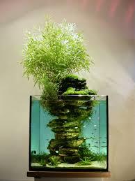 Aquascape Maintenance 100 Aquascape Ideas High Maintenance Aquariums And Wicked
